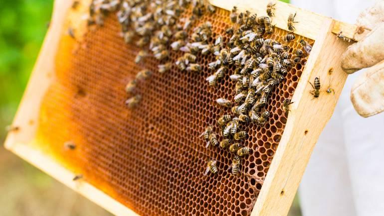 Bičių duonelė – kas tai ir kam? (Video)