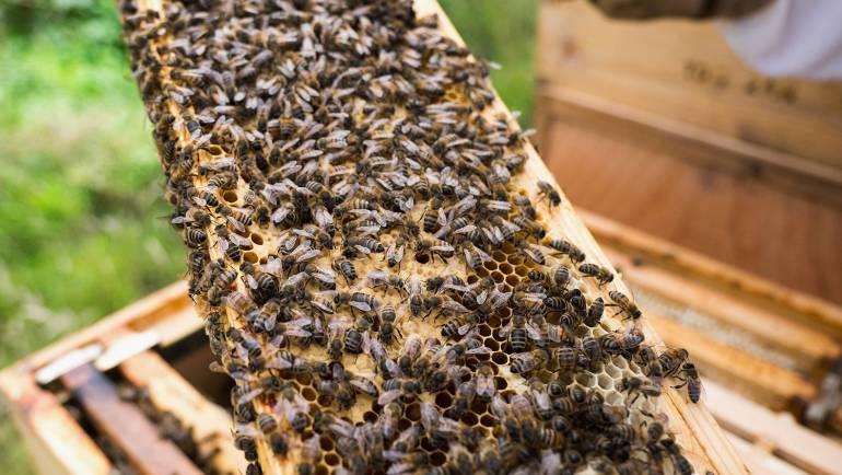 Bičių laikytojams – supaprastinti reikalavimai
