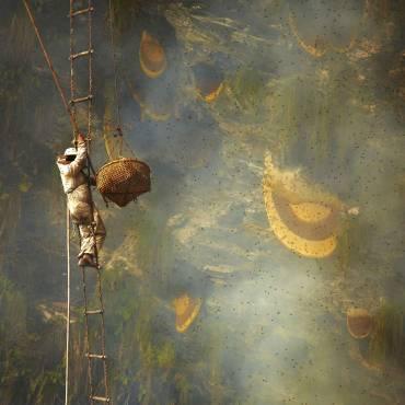 Stebuklingas gamtos kampelis, kur bitės neša haliucinogeninį medų